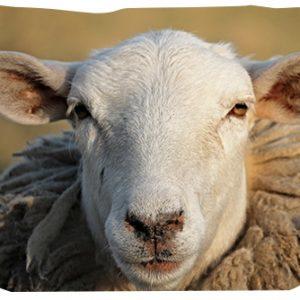 viande agneau